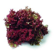 Лолло Росса имп. салат