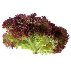 Лолло Росса отч. салат