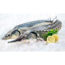 Рыба Осетр охлажденный